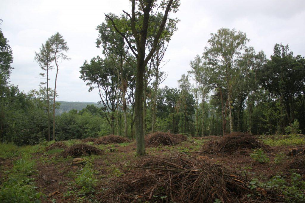 Příprava části evropsky významné lokality Ronov-Vlhošť na podzimní výsadbu a oplocení buků, dubů, lip a javorů na ochranu před zvěří. Foto: Pavlína Šámalová