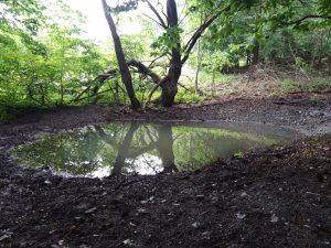 Digged pool in a beech wood in the Bílé Karpaty Site of Community Importance. Photo: Martin Tomešek