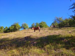 Pastva koní v evropsky významné lokalitě Hradiště. Foto: Petr Jiskra